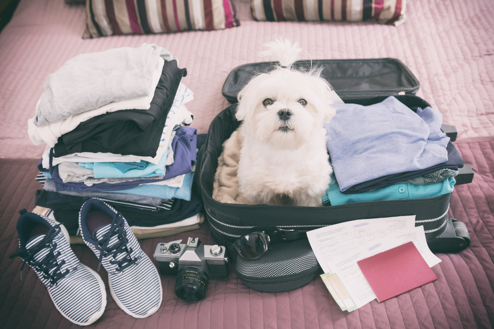 Traveling in Long Island with Your Pet