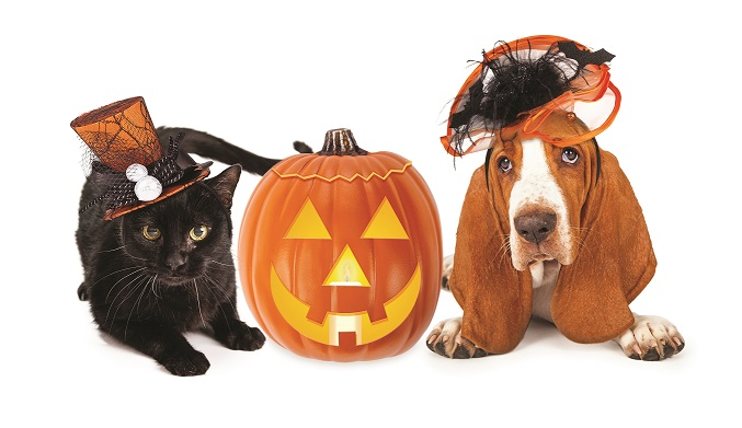 Howl-o-ween Pet Safety Tips