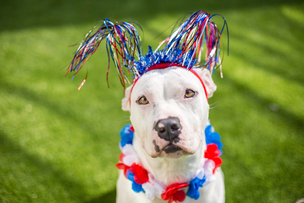 Fourth of July Firework Safety for Pets