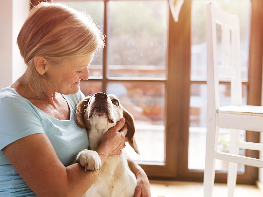 The Golden Years: Helping Your Senior Pet Stay Healthy and Active
