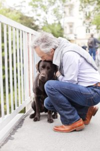 Taking Care of Your Aging Pet