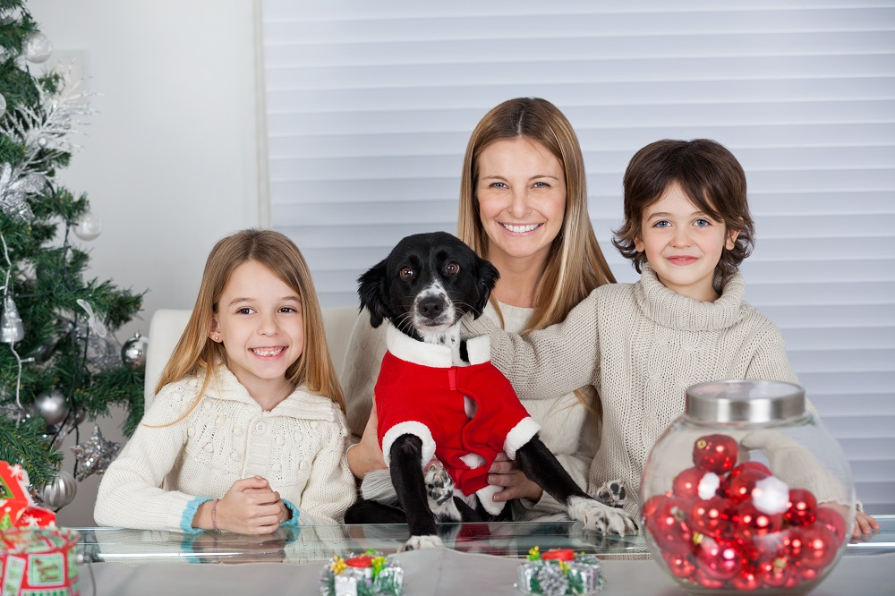10 Holiday Hazards That Could Land Your Pet in the Emergency Room