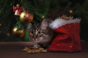 EEVC potential holiday hazards for pets