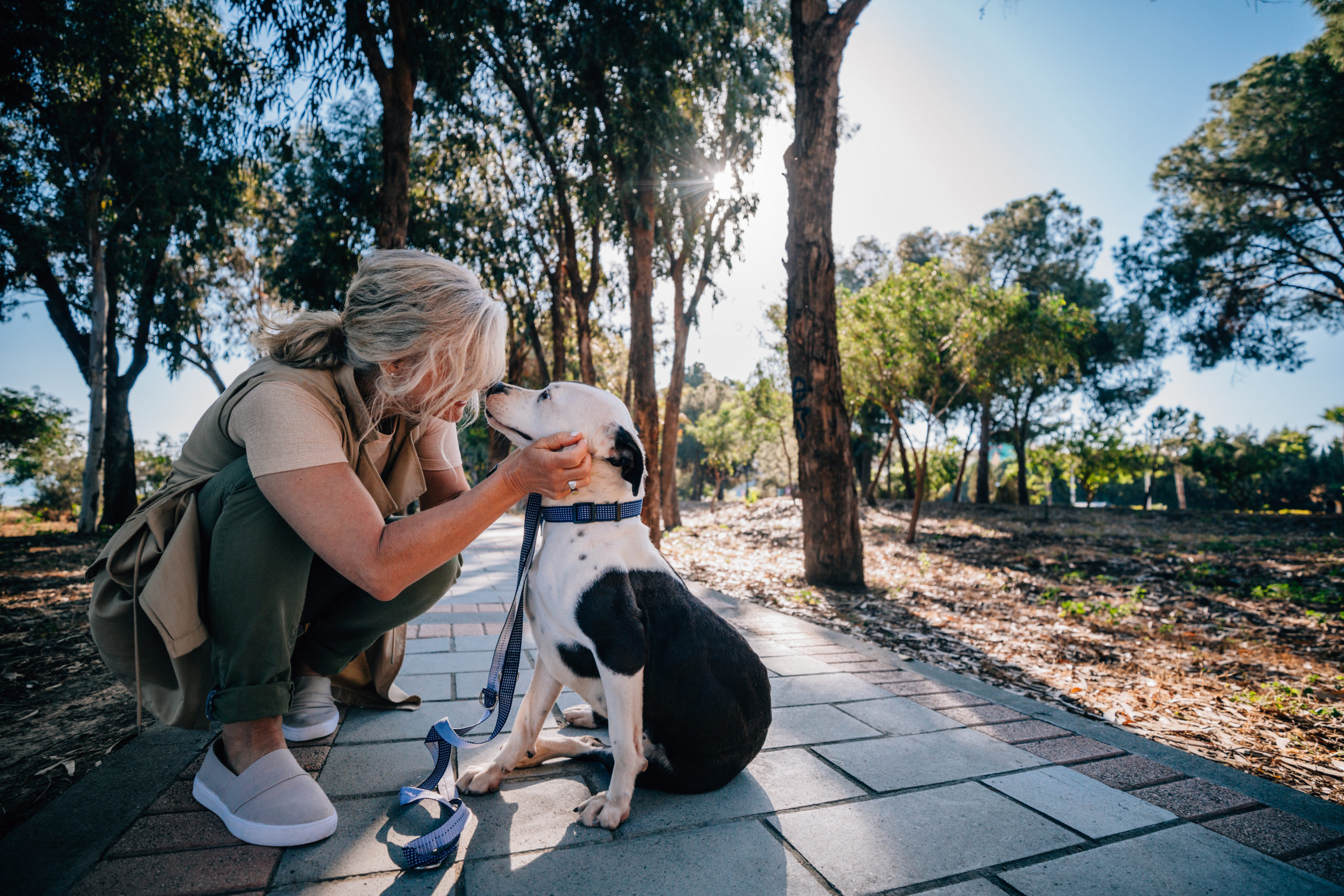 Physical Rehabilitation: Helping Your Pet Recover Faster